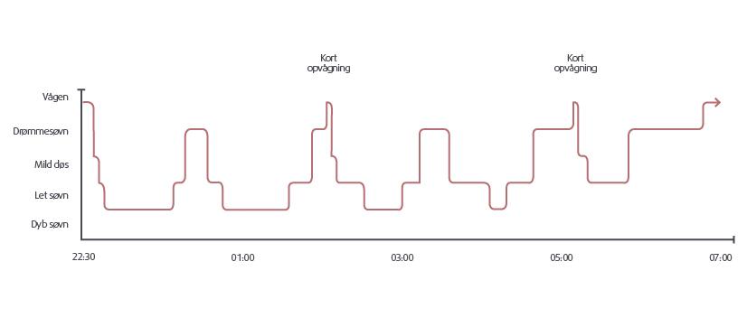 de 4 søvnfaser